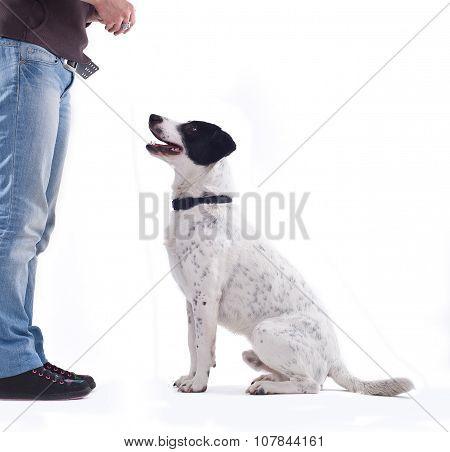 Girl training here dog