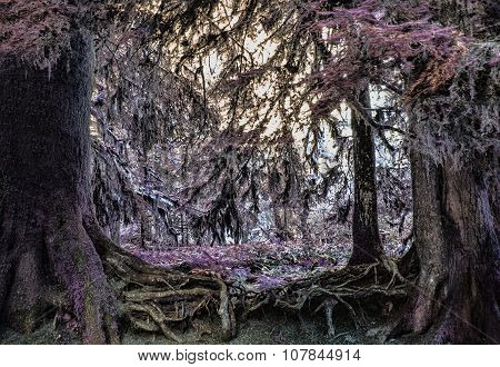 Tree Root Fairyland