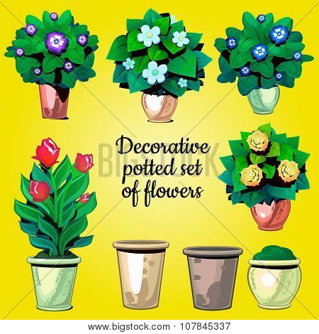 Set of decorative plants flowers and empty pots