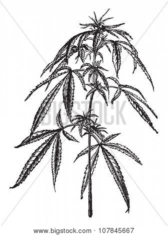 Europe hemp (female), vintage engraved illustration. Industrial encyclopedia E.-O. Lami - 1875.