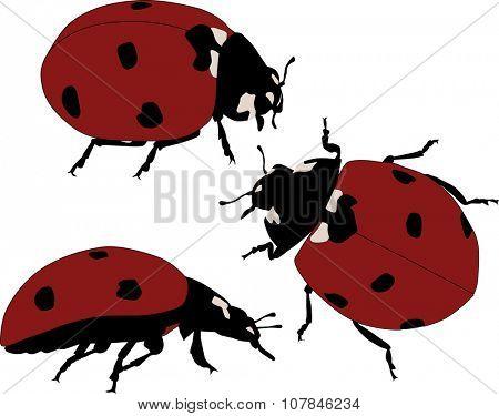 illustration with red ladybugs isolated on white background