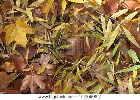 Close Up Of Fallen Leaves In Autumn