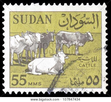 Sudan 1962 cattle