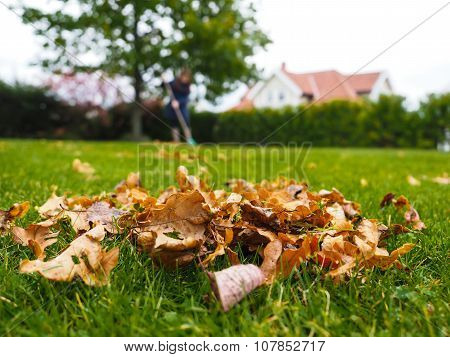 Female Person Raking Green Grass From Brown Leaves At Autumn