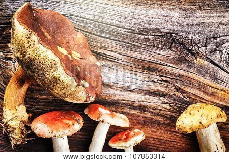 Autumn Still Life With Forest Mushrooms