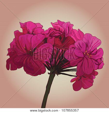pbeauty pink geranium