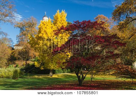 Colourful Gingko And Maple Tree In Autumn