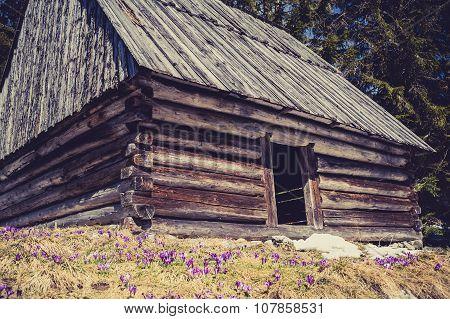Wooden Hut In Chocholowska Valley, Tatra Mountains