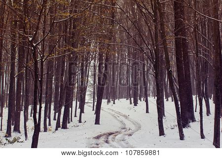 The Footpath Among The Autumn Forest Is Covered With The First Snow