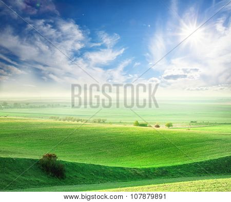 Wavy field with green grass