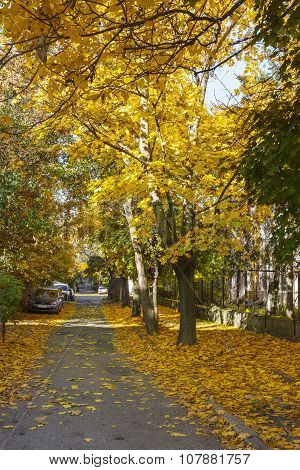 Street With Yellow Maples.