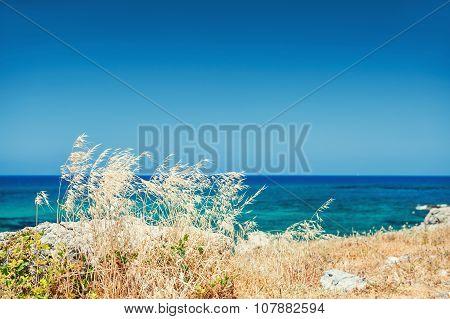 Wild Grasses On The Sea Coast, Crete Island, Greece
