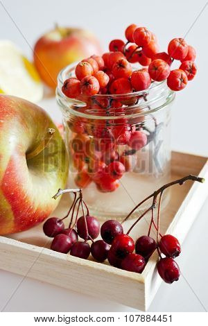 Autumnal Berries - hawthorn, Rowan And Apple