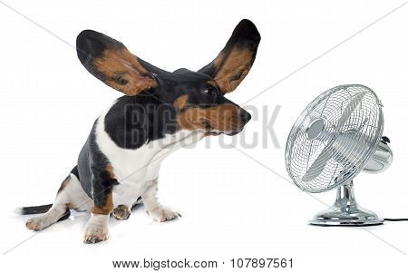 Young Basset Hound And Ventilator