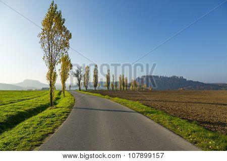 Avenue Of Poplars By Rocky Massif Lilienstein