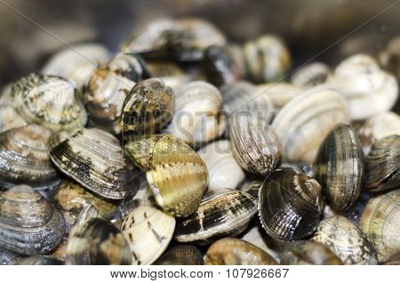 Clams From The Pan While Cooking