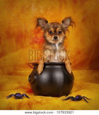 Spooky Pup