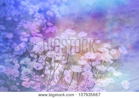 Dreamy Beautiful Floral Background With Bokeh Lights