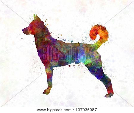 Canaan Dog In Watercolor