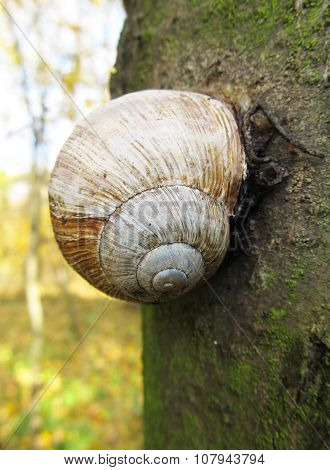 edible snail on the tree