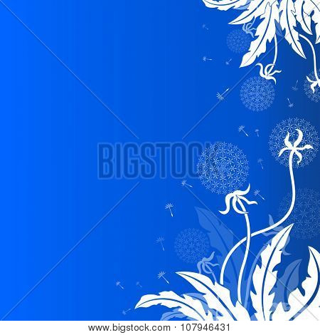 Abstract dandelion background with blue copy space.