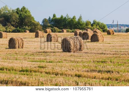 Straw Haystacks On The Grain Field