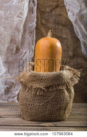Gourd In Sackcloth