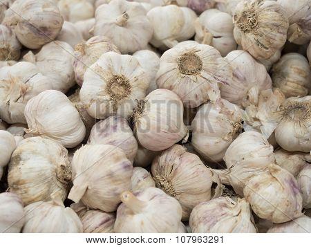 Garlic Cloves Closed Up