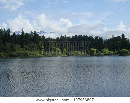 Rippled lake and lush forest
