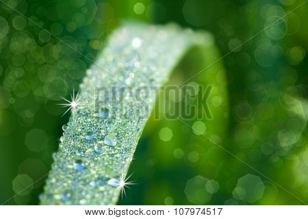 Nature Background with Grass and drops of dew, macro, soft focus and magic lights