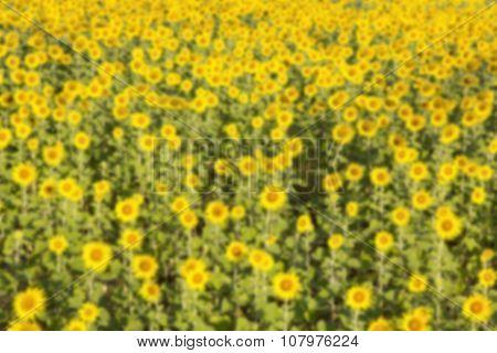 Sunflower Blur Background.
