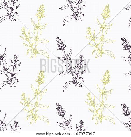 Hand drawn hyssop branch wirh flowers stylized black and green seamless pattern