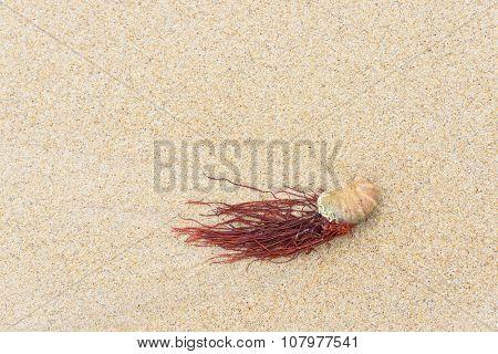 Seashell and seaweed on a beach