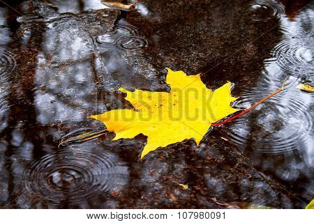 Natural Autumn Background. Yellow Maple Leaf In A Puddle In The Rain.