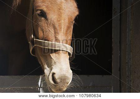 Closeup View Of Mule