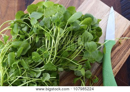 Watercress Salad Ingredient.