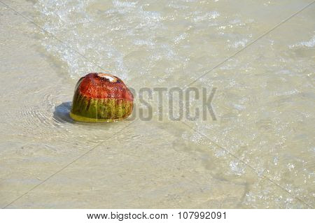 coconut on the seashore