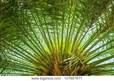 Green palm leaves against blue sky.