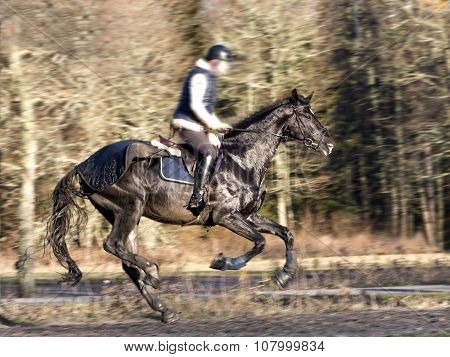Galloping Black Horse