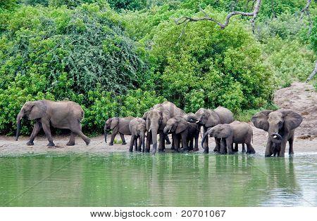 The lagoon of elephants