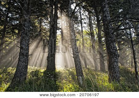 Power Of The Godly Rays