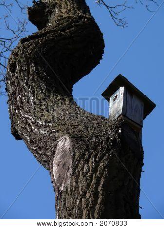 Bird'S House On A Curve Tree