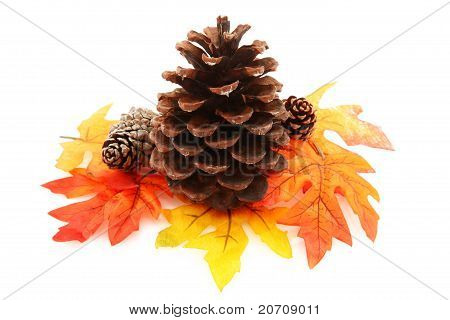 Pine Cone With Leaves