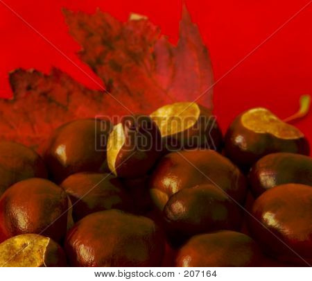 Conkers And Leaf