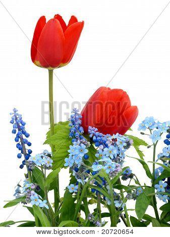 Sptings Rgb Colors