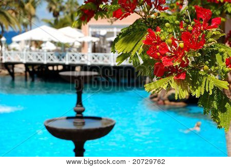 Flowers (in Focus) At Swimming Pool, Open-air Restaurant And Luxury Hotel, Tenerife Island, Spain
