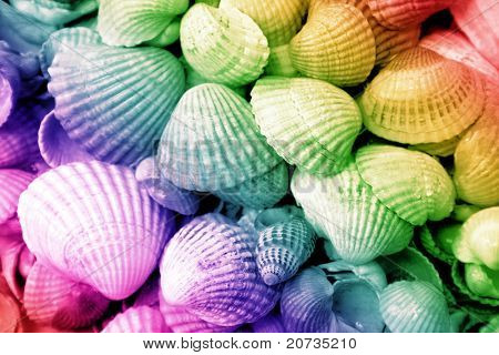 cockleshells background on the colored background
