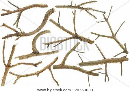 Pine Branches Without Needles