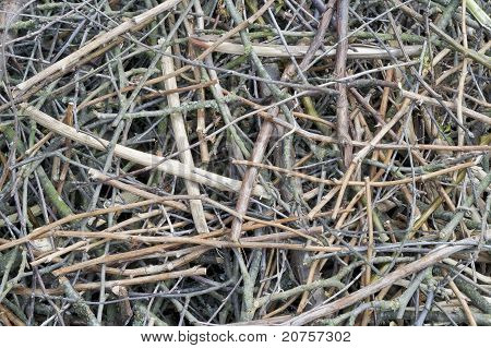 Background From Set Of Thin Dry Branches