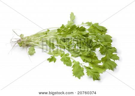 Fresh Winter cresss vegetable